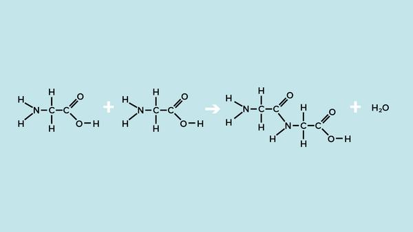 Aminosyrekaede
