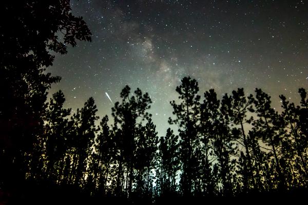 Bladen Lake Forest   Milky Way   Meteor